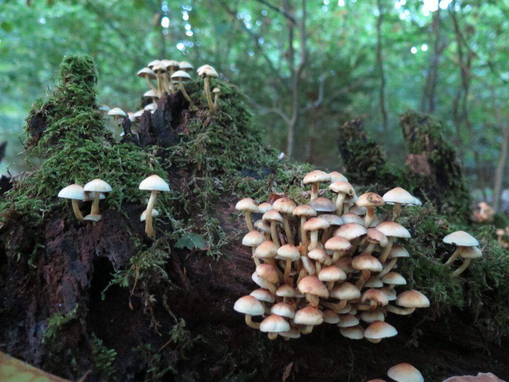 Pilzkolonien an einem Stück Holz